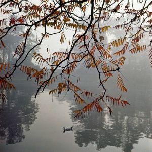 Bois de Bologne, Paris, 1965 ©JH Lartigue